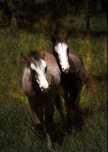 horses160arich