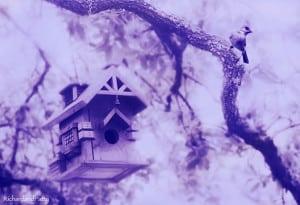 Bird-House-Purple