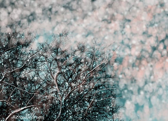 Snow-Over-Trees-Blue-Teal-Fantasy