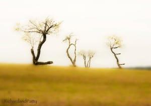 Trees-Spell-Love