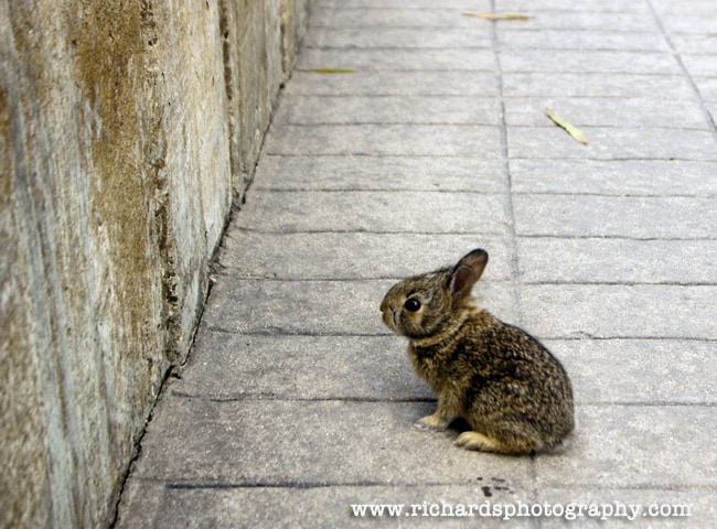 Baby Rabbit Art