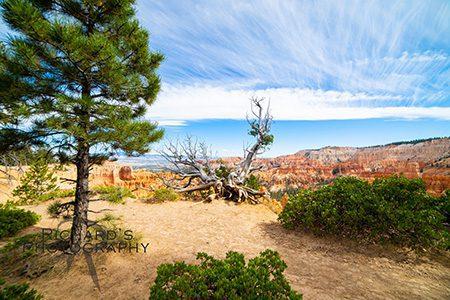 bryce-canyon-photo
